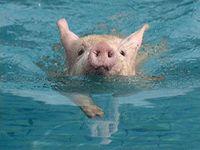 They swim!