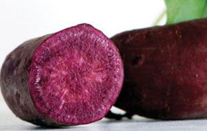 How to Sprout Sweet Potatoes for Slips — Green Shoots for Planting   Southern Exposure Seed Exchange
