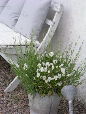 galvanized bucket white flowers