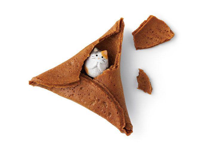 Cat in fortune cookie