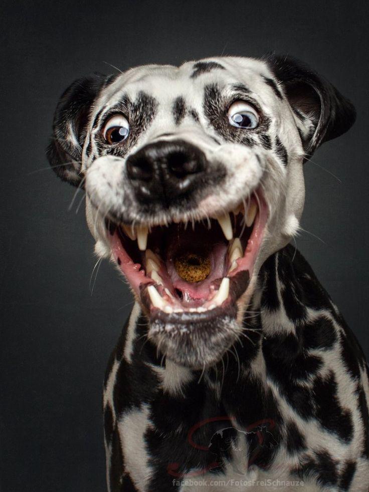 Za kilka sekund będzie po wszystkim! Zanim psy złapią przekąski, robią najśmieszniejsze miny świata