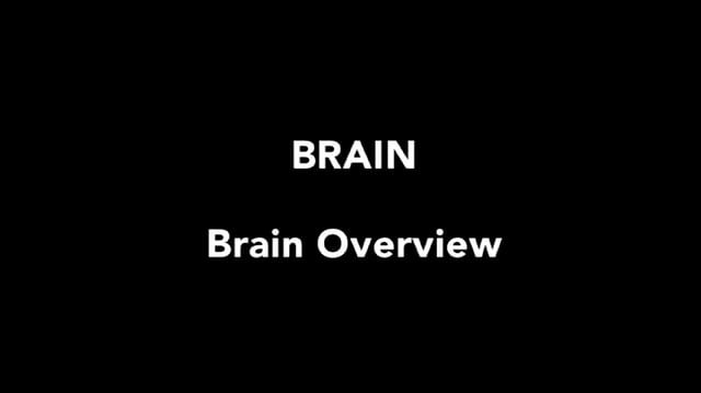 1:00 	Overview of parts of the brain 4:51  	Cerebrum 5:04  	Gray matter 8:59  	White matter (tracts) 12:06  	Gyri and sulci 13:11  	Meninges 22:05  	Epidural and subdural hematomas 25:00  	Flow of cerebrospinal fluid 32:20	Hydrocephalus 34:53  	Ventricle model  38:19	Blood supply to the brain