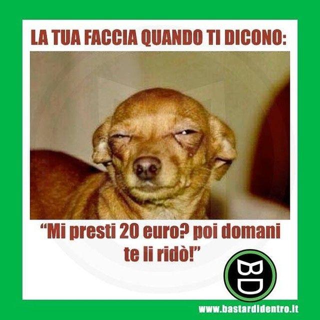 """Fammi vedere la tua """"faccia da prestito""""! #bastardidentro #prestito #cane #ipnoticamentebastardidentro www.bastardidentro.it"""