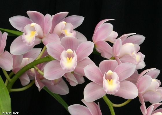 how to take care of a orchid house plant