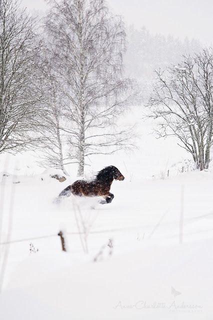 ♥ Fyra årstider - mitt liv på landet: Vinter