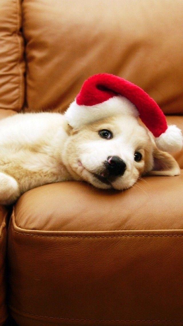 Christmas Puppy Ios 11 Iphone X Wallpaper Hd 4k Christmas Puppy Christmas Dog Cute Animals