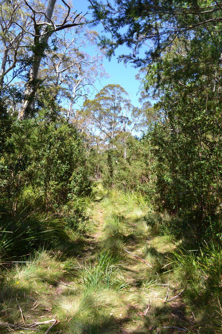A track at lisdillon on the east coast of #Tasmania