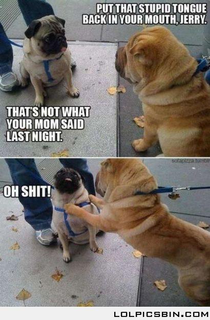 Your Mom: Laugh, Shar Pei, Funny Dogs, Funny Pugs, Sharpei, Funny Stuff, Dogs Humor, Yo Momma, Pugs Life