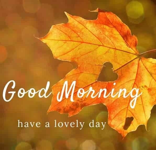 201 Good Morning Flower Images Free Download 2020 Good Morning Nature Good Morning Thursday Good Morning Rainy Day
