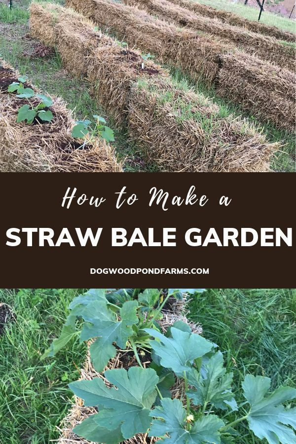 Straw Bale Gardening For Beginners How To Grow Vegetables In Straw Straw Bale Gardening Organic Gardening Tips Home Vegetable Garden