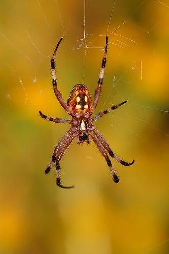 spiders essay