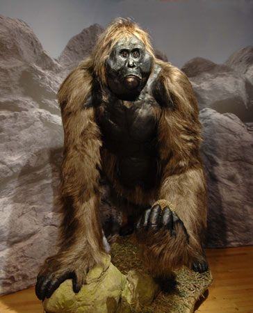 Gigantopithecus is an extinct genus of ape that existed from perhaps nine million years to as recently as one hundred thousand years ago, in what is now Nepal, China, India, and Vietnam. They were the largest known apes that ever lived, standing up to 3 m (9.8 ft), and weighing up to 540 kg (1,190 lb)