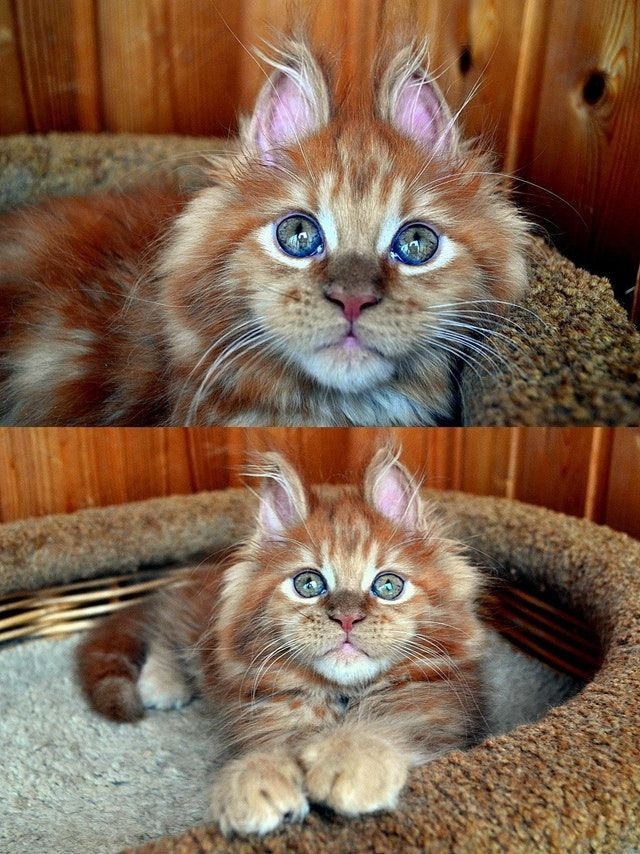 Reddit The Front Page Of The Internet Beautiful Kittens Pretty