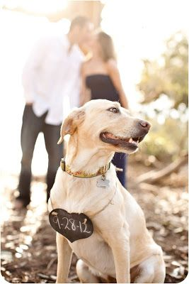 """""""Ah yes! My human are getting married."""" Cute save the date photo with your dog."""