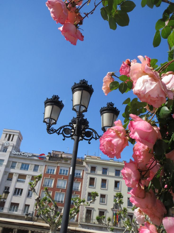 Logrono in May, roses everywhere