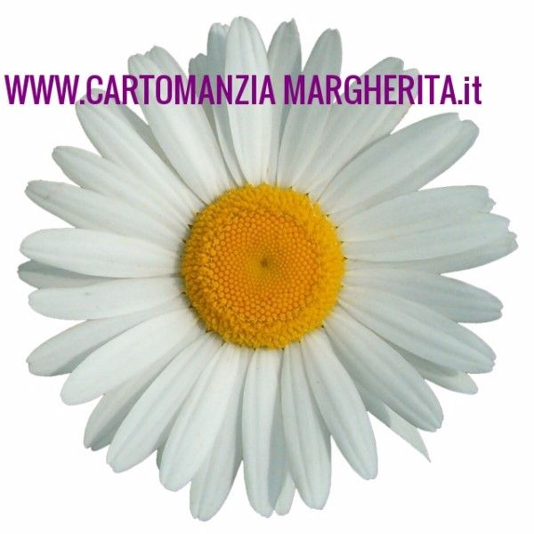 899 11 90 46 CARTOMANZIA MARGHERITA 5172301- ( annunci MI) | Inserzionigratis.com