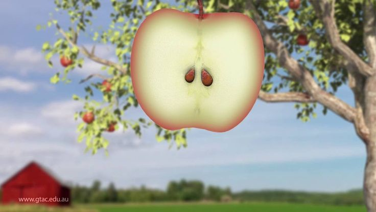 Apple Life Cycle video~ beautiful fast-motion video (very short) of the life cycle of an apple.