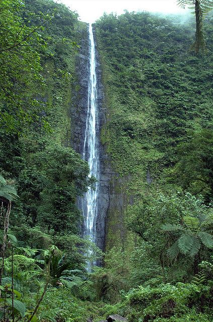 Sinaloa Falls, Savai'i. Tallest waterfall in Samoa.
