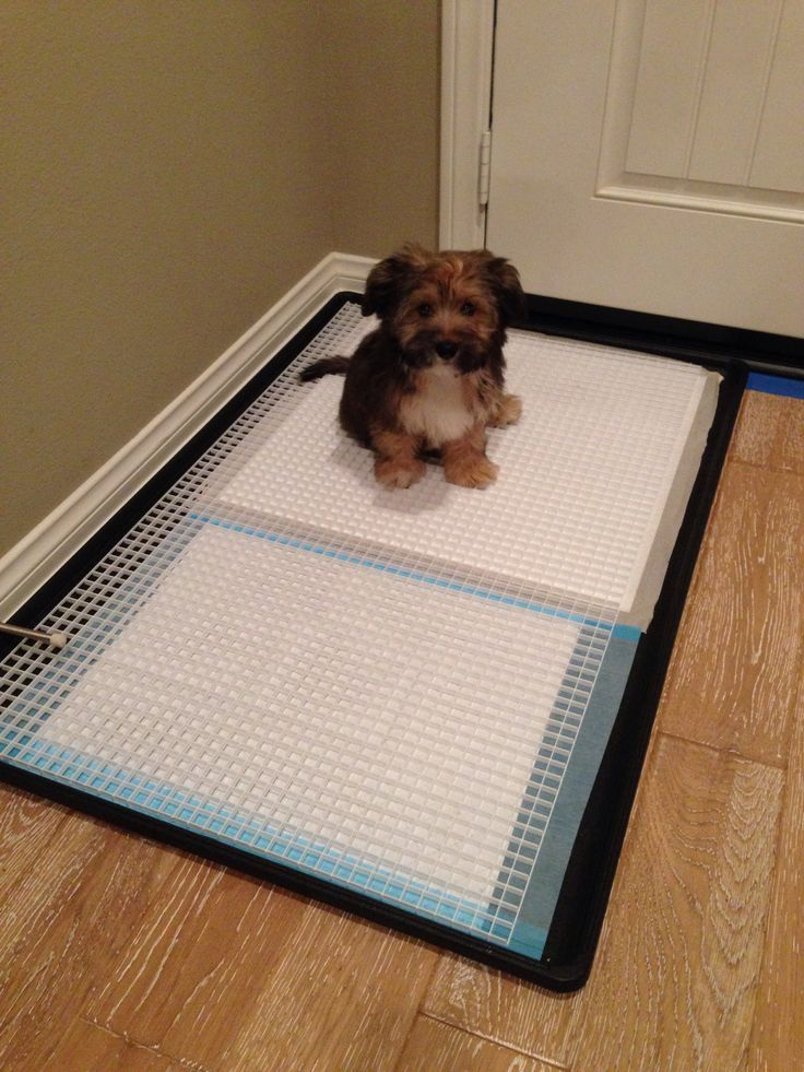 """DIY dog toilet potty tray/pan; prevents pee that puddles on the paper and soiling the dog's paws.  Cheaper & larger than UGODOG potty trays.  PURCHASE:  1) Amazon Replacement pan for Midwest dog crates 42"""" long or size of your preference 2) Home Depot white louvre for ceiling lights in the lighting department; cut to fit. CLEANING: hose down with water, as needed;  for stubborn stains or residues, soak louvre in the potty pan with water and some vinegar, wait an hour plus, then hose & rinse…"""