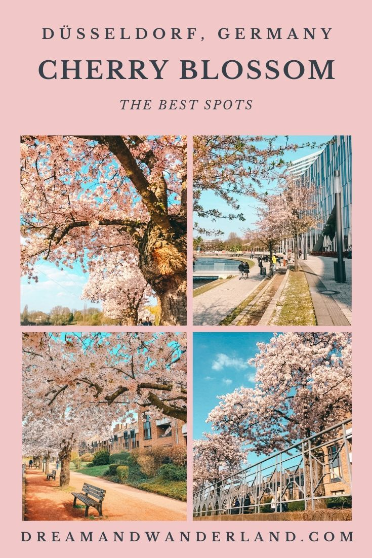 Sakura In Dusseldorf Or Where To Find The Best Spots To See Cherry Blossom Dream And Wanderland In 2020 Europe Trip Itinerary Europe Travel Destinations Germany Travel Guide