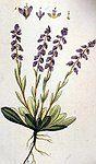amareala planta medicinala In uz intern, amareala este folosita pentru tratarea astmului bronsic...In uz extern, planta medicinala este folosita pentru cicatrizarea urmelor de varsat.