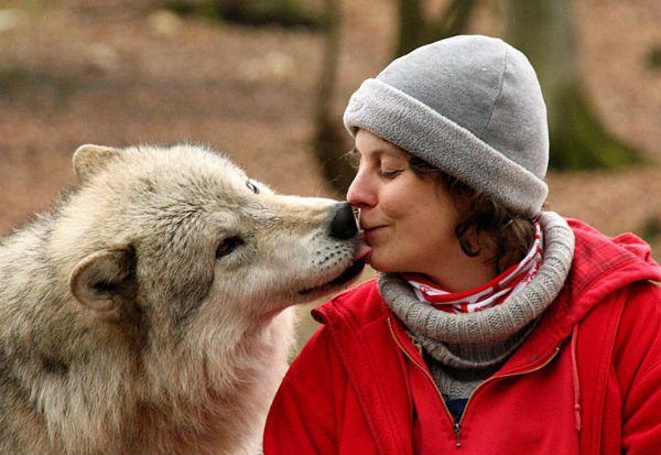 И волк способен стать лучшим другом человека