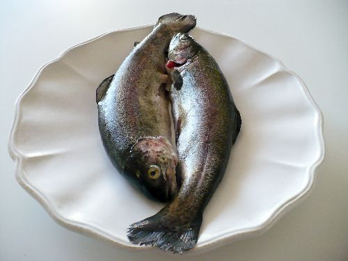 17 best images about tips for cooking seafood on pinterest for Your fish store
