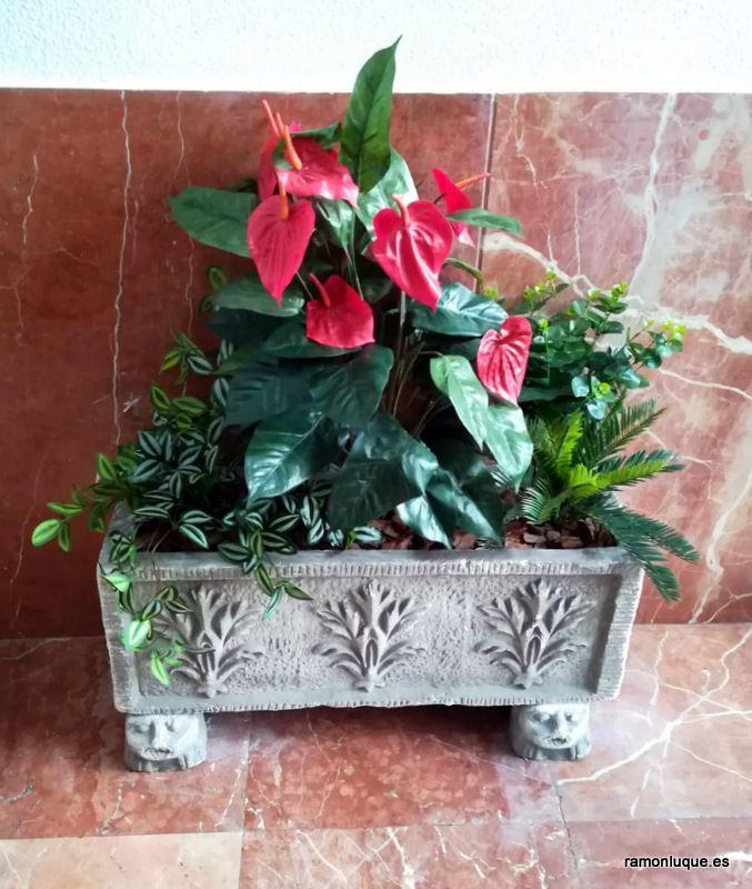 11+ Plantas para portales inspirations