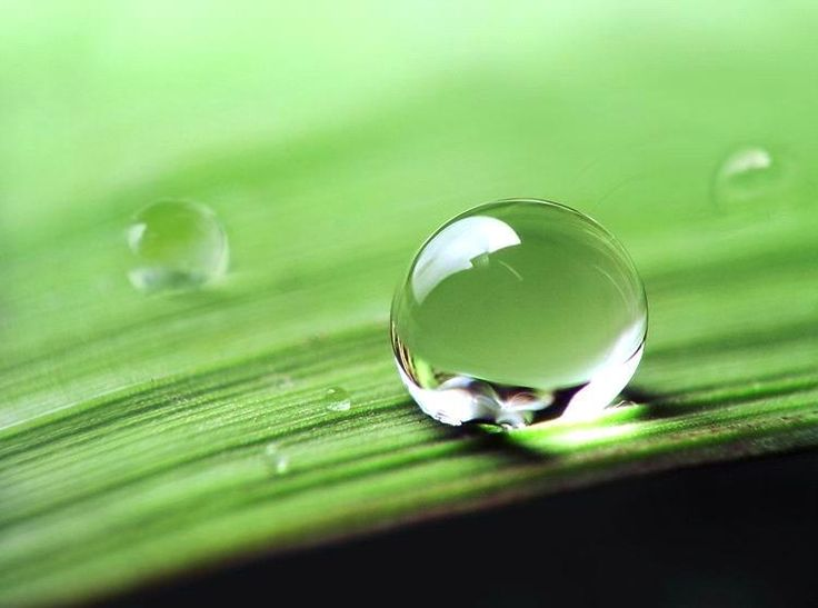 Healthy Ingredient 101: Hyaluronic Acid~ HA occurs naturally in every cell of the body but with age, the ability of the skin to produce HA decreases. It absorbs water and traps it between cells to plump the skin. HA stimulates production of skin cells, encourages cell growth, and holds water in the skin, keeping it moisturized. HA is found in the following Verefina products: Ultra Hydrating Rosewater Mist and After-Sun Mist.