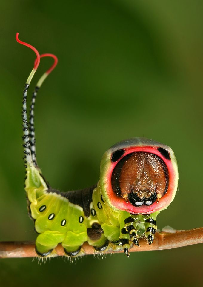 178 imagens de insetos – VivoVerde