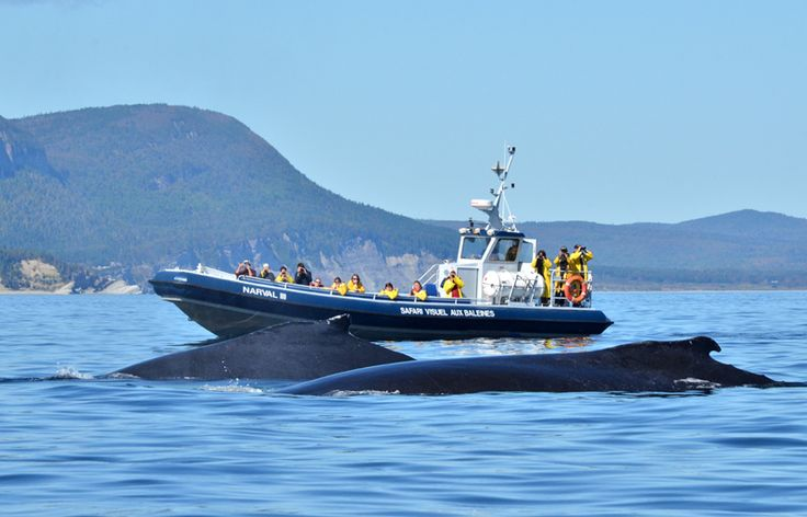 Croisière aux baleines au Parc national du Canada Forillon - Photo : Marc Loiselle, Le Québec maritime