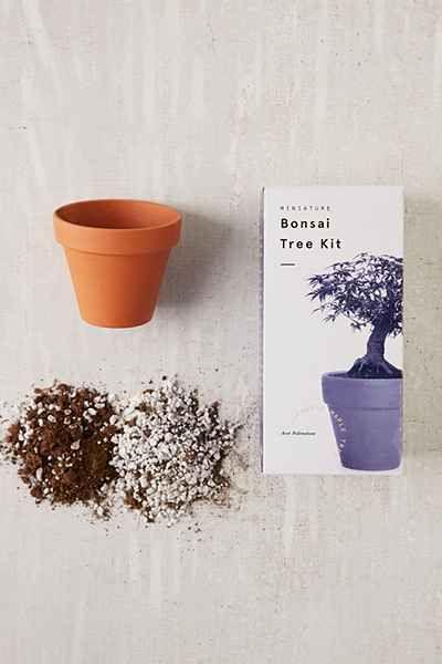 arbre bonsa miniature pour lintrieur
