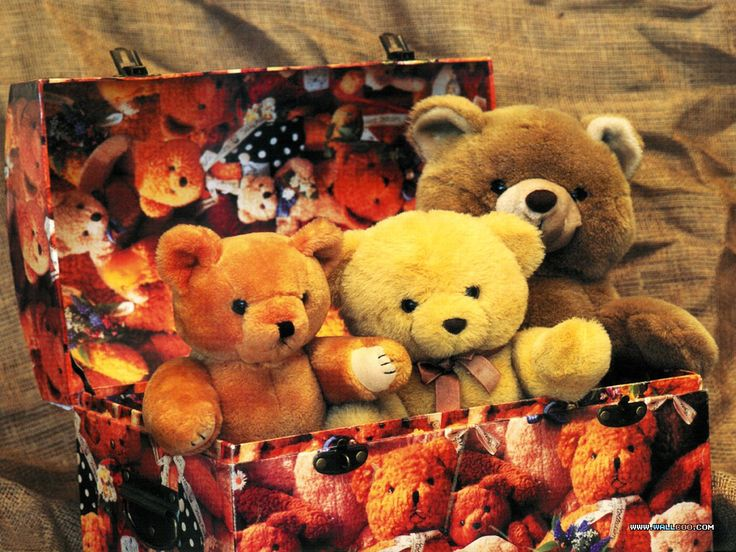 My little Bears!!