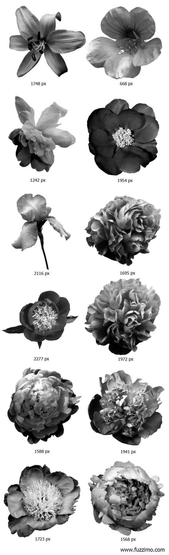 free photoshop brushes | Free 12 Hi-Res Photoshop Flower Brushes | fuzzimo