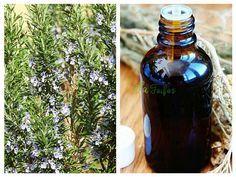 Elixir de ROZMARIN pentru întărirea MEMORIEI | La Taifas