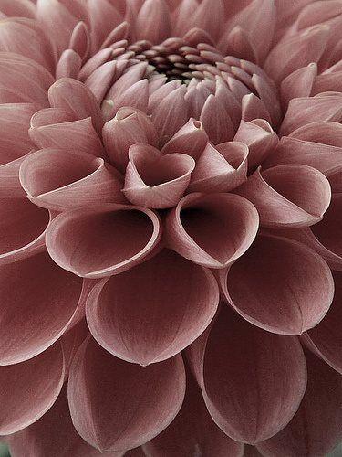 close up flower tube idea