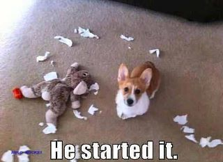 He started it: Corgis, Animals, Dogs, Funny Stuff, Humor, Funnies, Funny Animal