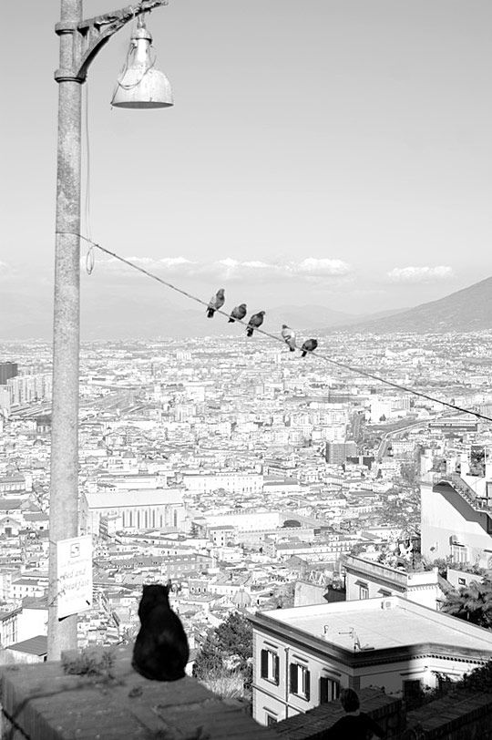 Naples by Kevin Pineda : Daily Inspirations no. 26 | Cruzine