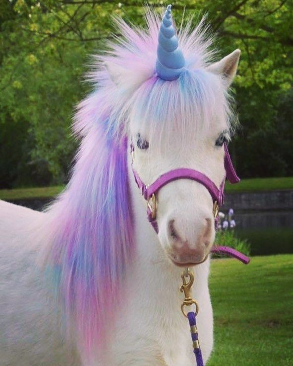 les licornes existent vraiment licorne cheval montpellier monpoulain horse french sun poney cute monpoulain pinterest horses - Poney Licorne