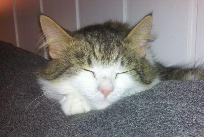 Tanker om kattens behov - Lykkedyra