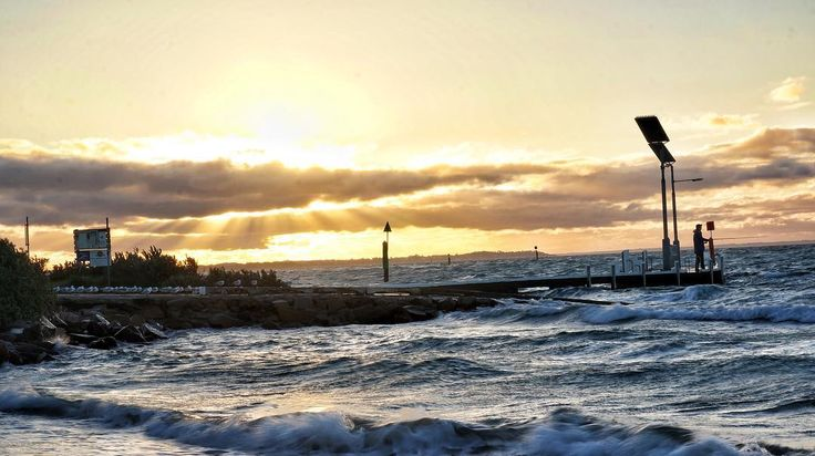 The Lineup. The seagulls patiently await the fishermans return #ryepier #melbourne #sunset