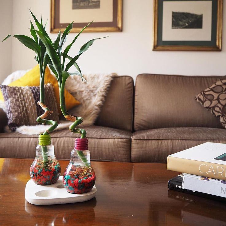 Las 25 mejores ideas sobre centros de mesa de bamb en - Ver decoraciones de salones ...