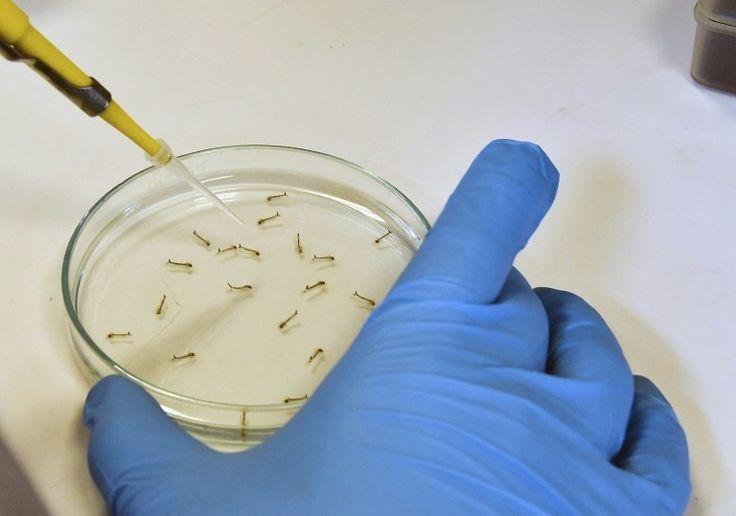 Brazil finds Zika virus causes deformities in babies