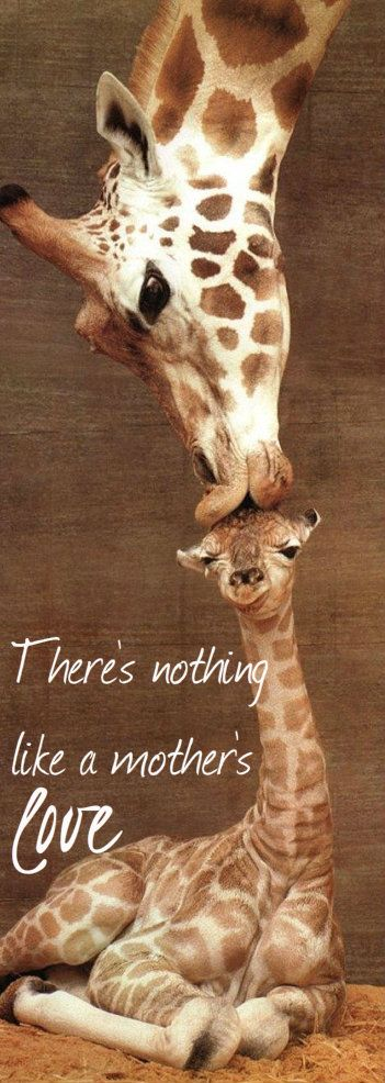 #Giraffe #Baby #Momma #Love #Quote I repined this cause my little girl loves giraffes and this picture is cute!