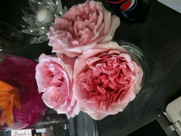 Cabbage roses! Look like peonies! Ugh. Not much cheaper than peonies.