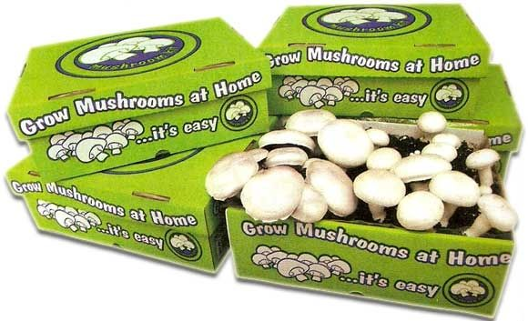 How to Grow Button Mushrooms at Your Own Home at Easy with mushroom growing kits