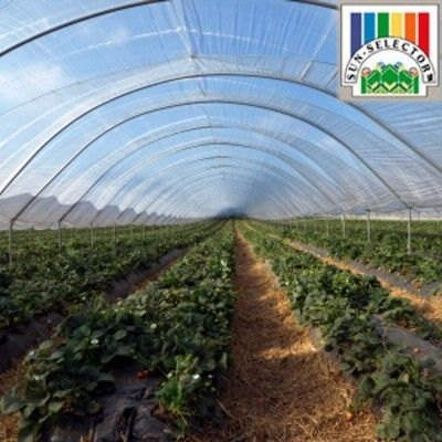 Sun Selector Greenhouse Plastic : Sun Selector UVA Clear Greenhouse Film, 4 year 6mil (per sq.ft)
