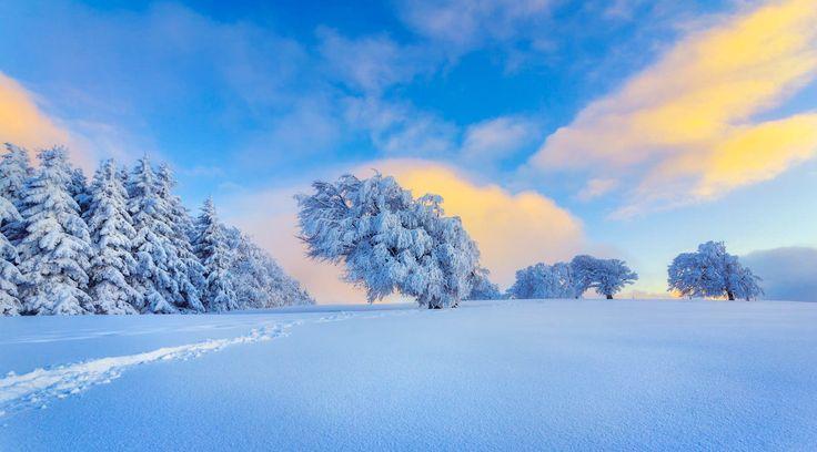 ***Winter (Black Forest, Germany) by Alex Meyer