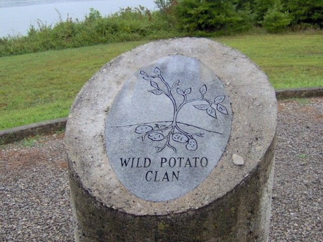 """Anigatogewi"" cannot confidently be translated; however, this clan is known as the ""Wild Potato Clan"", or occasionally as the ""Blind Savannah Clan.""[6]  The Anigatogewi's only subdivision was Blind Savannah, possibly a separate clan in origin. Historically, members of this clan were known to be 'keepers of the land,' and gatherers. The wild potato was a main staple of the traditional Cherokee life in the Southeast (Tsalagi Uweti)."