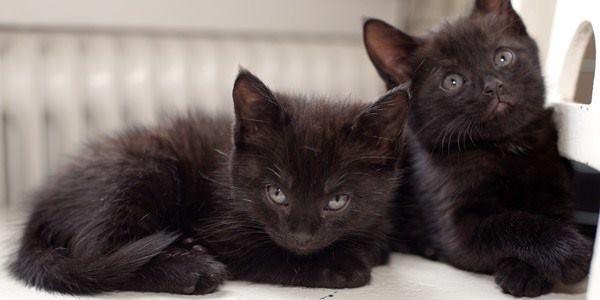 Yavru Kedi Bakımı – Veteriner Hekim Blogu